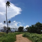 tall grass dirt road palm tree